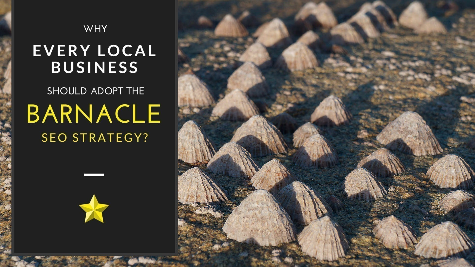 Why every Local Business should adopt the Barnacle SEO Strategy?